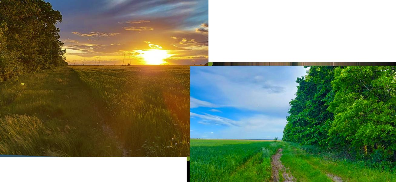 imagini din traseul Alerg în Dumbrava